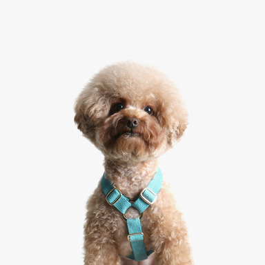 Soft Harness (Mint)