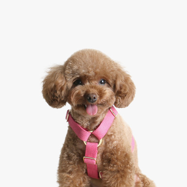Soft Harness (Cherry Pink)