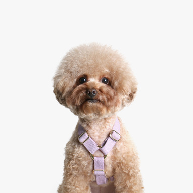 Soft Harness (Lavender)
