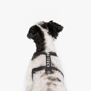Label Harness (Charcoal)