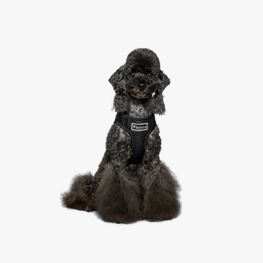 Bennys Leather Harness2 (Black)