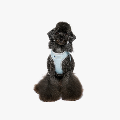 Bennys Leather Harness2 (Sky Blue)